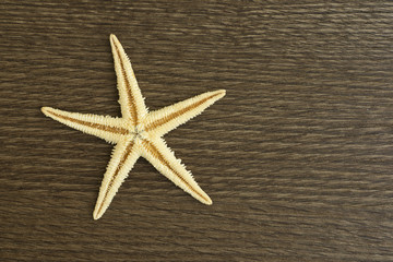 starfish on the wood