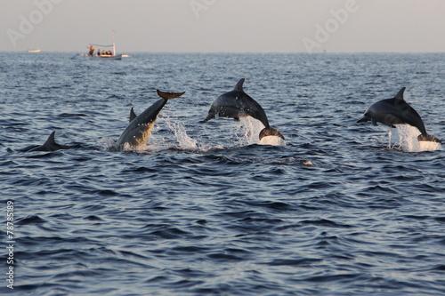 Aluminium Indonesië Dolphins at Lovina beach in Bali, Indonesia