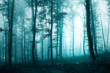 Beautiful turquoise blue forest
