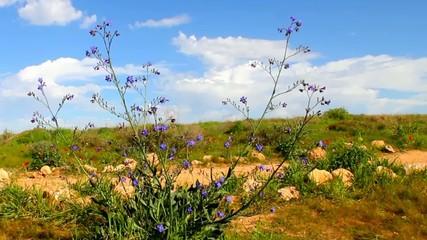 Spring at the Negev desert