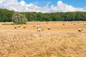 Strohballen auf dem Feld, Landwirtschaft, Rundballen