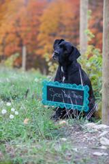 engagement sign dog puppy black