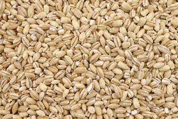 background of raw organic barley