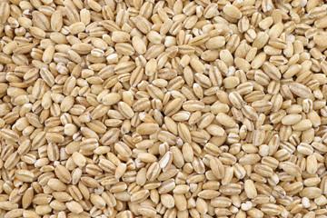 background of raw organic barley