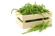 fresh Samphire in a wooden box on a white background