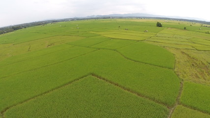 Aerial Shot at rice fields