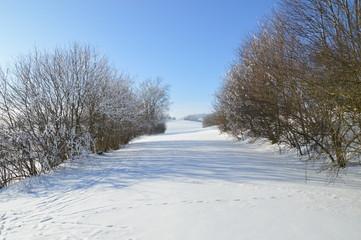 Schnee, Bäume, Weg, Himmel