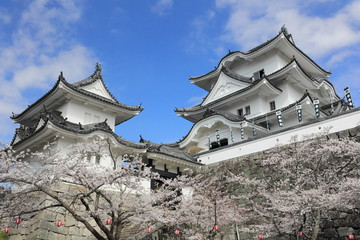 桜満開の伊賀上野城