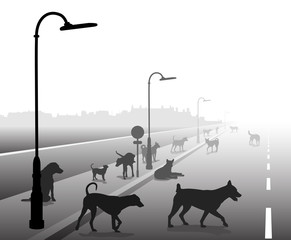 Stray dog street