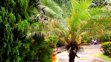 Rainy season in the tropical region. Palm tree In wind. Video