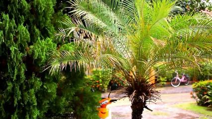 Rainy season in the tropical region. Palm tree In wind. Video