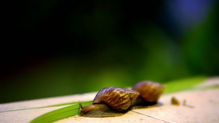 Snail crawling. Macro video shift motion