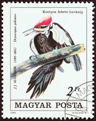 ileated Woodpecker, Dryocopus pileatus (Hungary 1985)