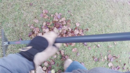 Yard work raking autumn leaves on lawn