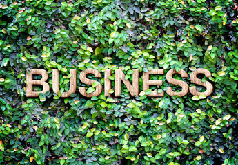 "Eco concept : Wood texture "" Business "" word icon on green leave"