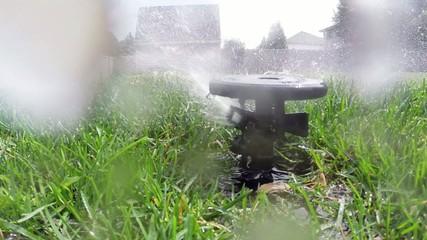 Oscillating lawn sprinkler watering grass in backyard