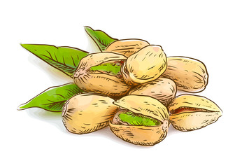 Pistachios. Vector illustration.