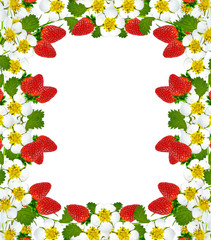 frame with berries and flowers of strawberry