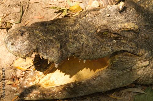 Foto op Plexiglas Krokodil head of crocodile
