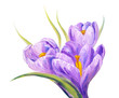 Постер, плакат: Crocuses oil painting on canvas