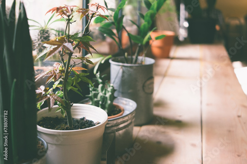 A small plant pot displayed in the window - 78809782