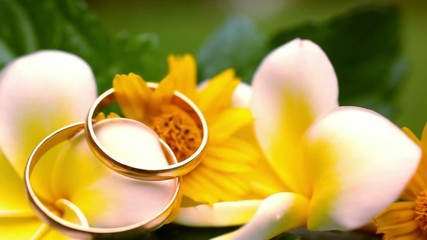Close up wedding gold rings on the Thai flowers frangipani