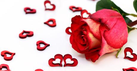 Rose mit Herzen