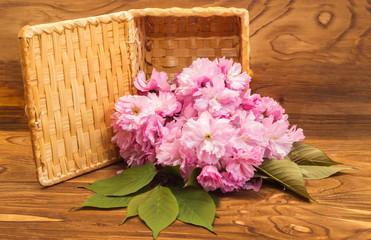 Still Life with sakura flowers