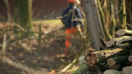 Baumstämme mit Waldarbeiter bei Waldarbeiten
