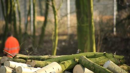 Baumstämme mit Waldarbeiter