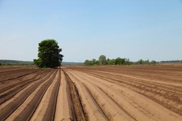 Plowed field in spring day