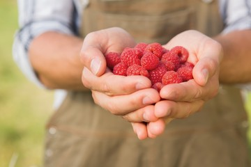 Farmer showing his organic raspberries