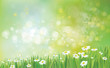Vector nature background with grass and chamomiles. - 78830386