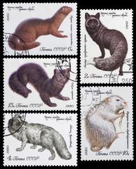 fur bearing animals