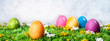 canvas print picture - Easter eggs