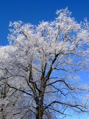 Baum, Winter