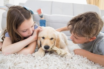 Siblings playing with dog on rug