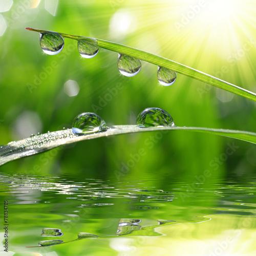 Fresh green grass with dew drops closeup. Nature Background © vencav