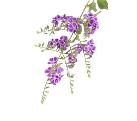 thai flower isolate on white background