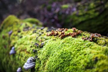 Mushrooms on rotting tree