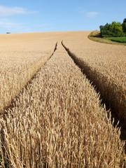 trace du tracteur dans champ de céréales