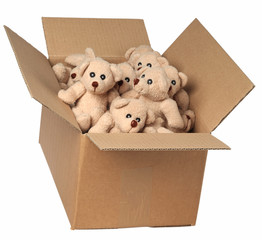 Isolated teddy bears in cardboard box