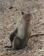 monkey sitting on the beach