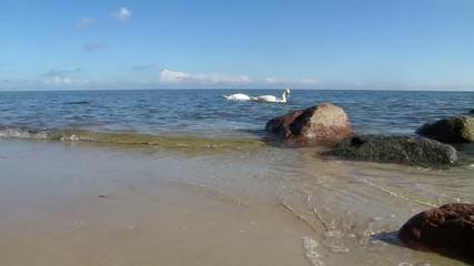 Schwan auf Ostsee