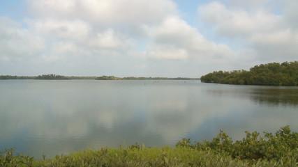 Florida Wetlands Swamp