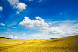 Tuscany, rural landscape near Pienza. Siena, Val d Orcia, Italy