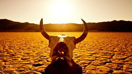 Pan of Skull on the Desert Floor - Death Valley