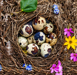 a nest with  eggs - easter still life