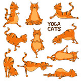Funny red cat doing yoga position