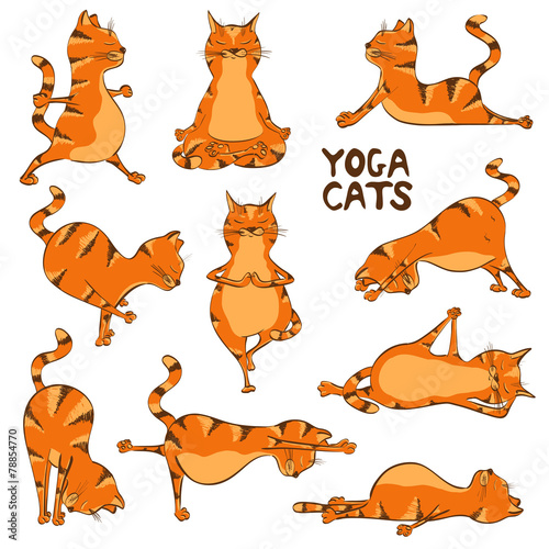 Funny red cat doing yoga position - 78854770